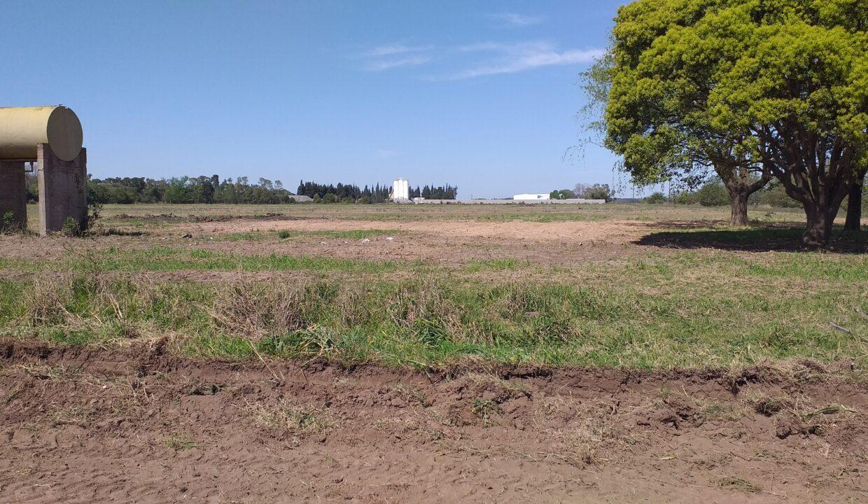 5,2 Ha Zona industrial San Pedro (4)